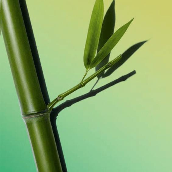 Bambupuder