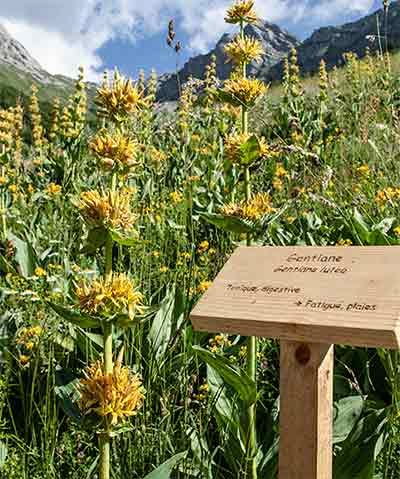 Domaine Clarins blommor